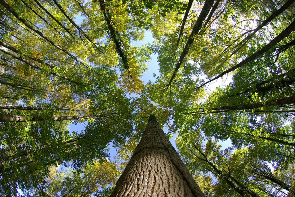 En manque de câlins ? Pensez aux arbres !